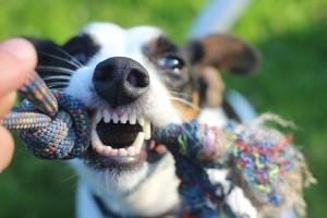 Det finns också sprayer som är mot farliga hundar